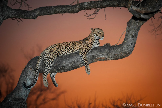 Mark Dumbleton : Wildlife and Landscape Photographer