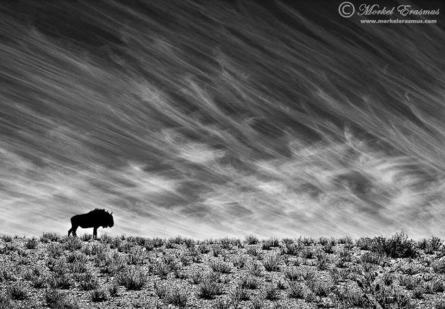 loneliness | Morkel Erasmus | Photodestination