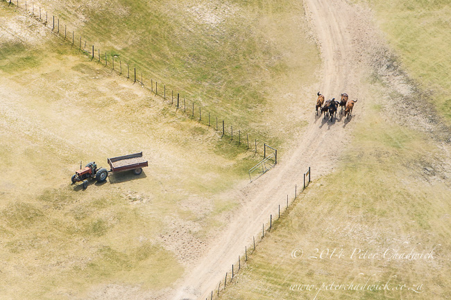Aerial view of a tractor and horses by wildlife and conservation photographer Peter Chadwick