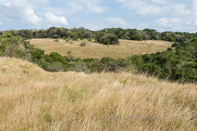 enseleni grassland and forest by wildlife and conservation photographer Peter Chadwick