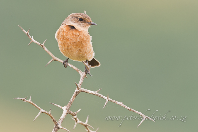 female stone chat