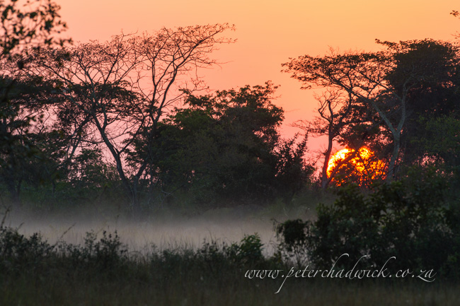 Panda floodplain sunrise by wildlife and conservation photographer Peter Chadwick