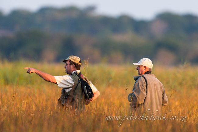 searching for the Eurasian Bittern by wildlife and conservation photographer Peter Chadwick