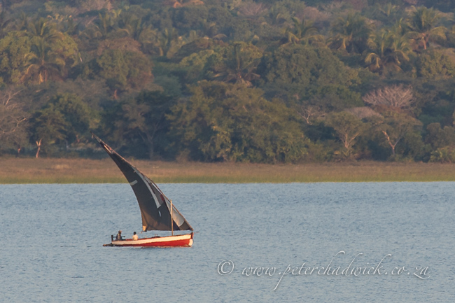 Dhouw on Caju Afrique lake by wildlife and conservation photographer Peter Cadwick
