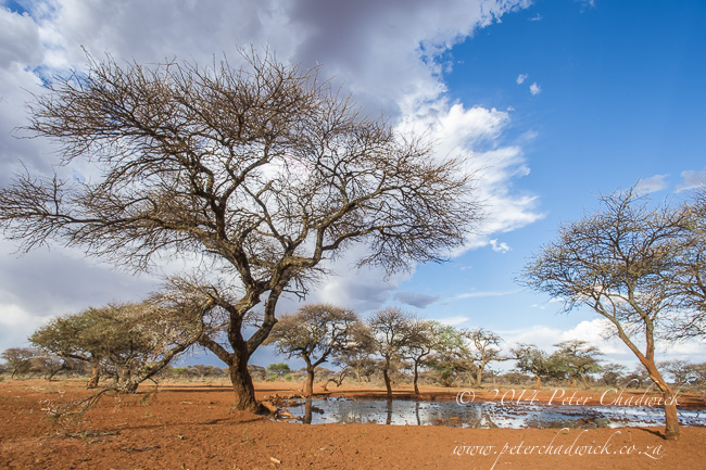Mokala landscape by wildlife and conservation photographer Peter Chadwick