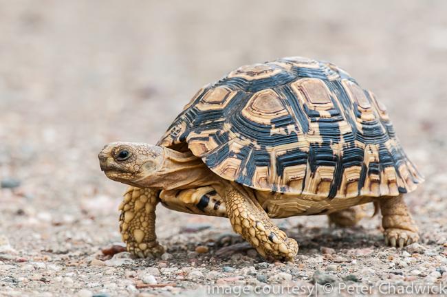Fascinating Reptiles