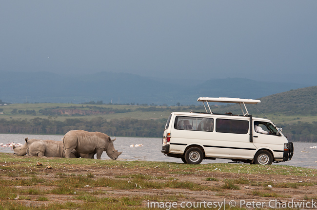 Tourists watching White Rhino by wildlife and conservation photographer peter chadwick