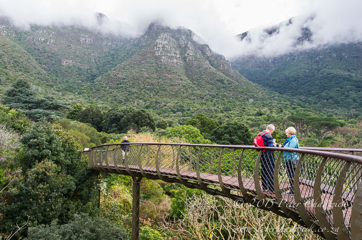 Boomslang Walkway at Kirstenbosch_© peter chadwick_African Conservation Photography