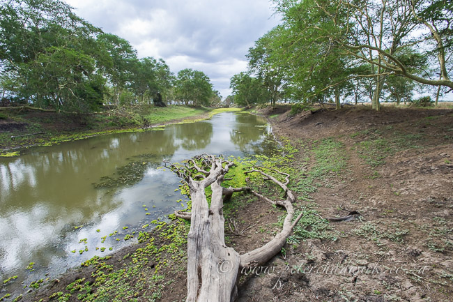 small river flowing into the urema floodplain by wildlife and conservation photographer Peter Chadwick