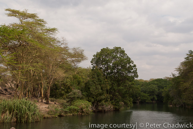 mzima springs by wildlife and conservation photographer peter chadwick