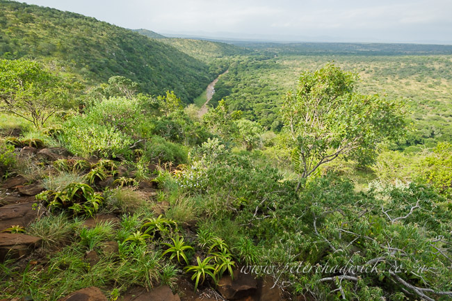 vast vistas of bushveld by wildlife and conservation photographer peter chadwick