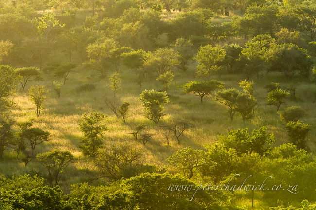 zululand bushveld dawn by wildlife and conservation photographer peter chadwick