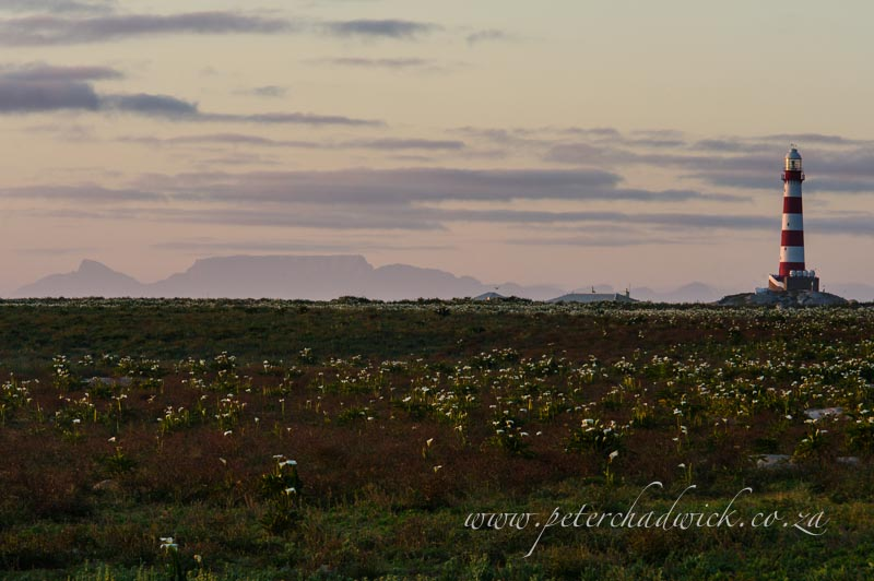 Dassen Island lighthouse and Table Mountain by wildlife and conservation photographer Peter Chadwick