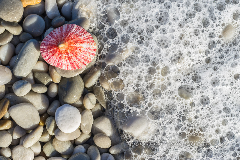 limpet shell washed ashore by wildlife and conservation photographer Peter Chadwick