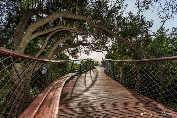 Boomslang Tree Canopy Walkway | Kirstenbosch | ©Arne Purves & The Boomslang Tree Canopy Walkway