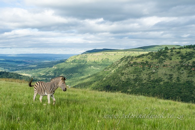 Grasslands Amongst South Africa S Most Threatened Ecosystems