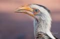 Limpopo Birding - Punda Maria
