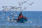 Rock Lobster fishermen return with the days catch. Paternoster Beach