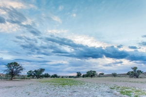 Auob Riverbed At Sunrise | Kgalagadi Transfrontier Park | Wildlife Photography | © Arne Purves