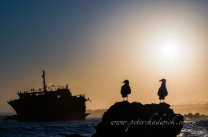 Shipwreck and kelp gulls by wildlife and conservation photographer Peter Chadwick