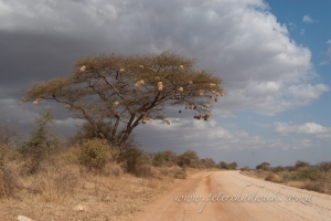 The road to amboseli by wildlife and conservation photographer Peter Chadwick