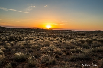 "Kgalagadi ""Land of Great Thirst"""