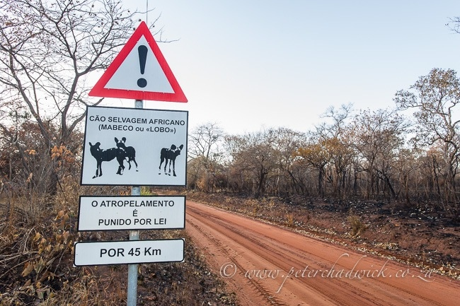 Wild Dog sign in Mozambique by wildlife and conservation photographer Peter Chadwick.