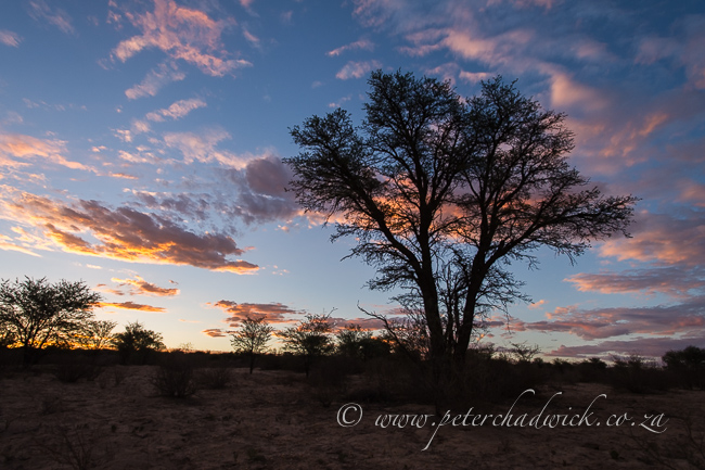 Nossob dusk sky by wildlife and conservation photographer Peter Chadwick