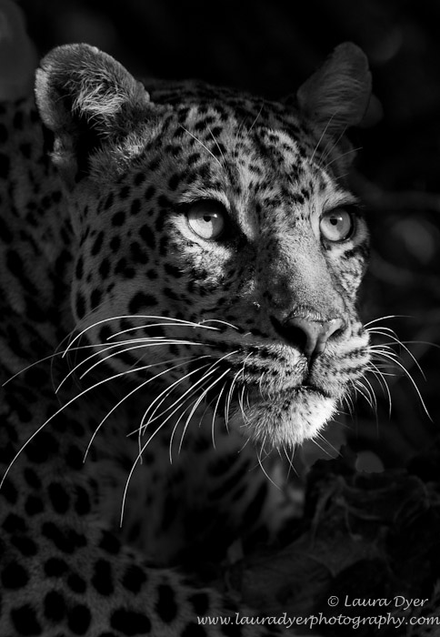 Laura Dyer - Photodestination Wildlife Photography