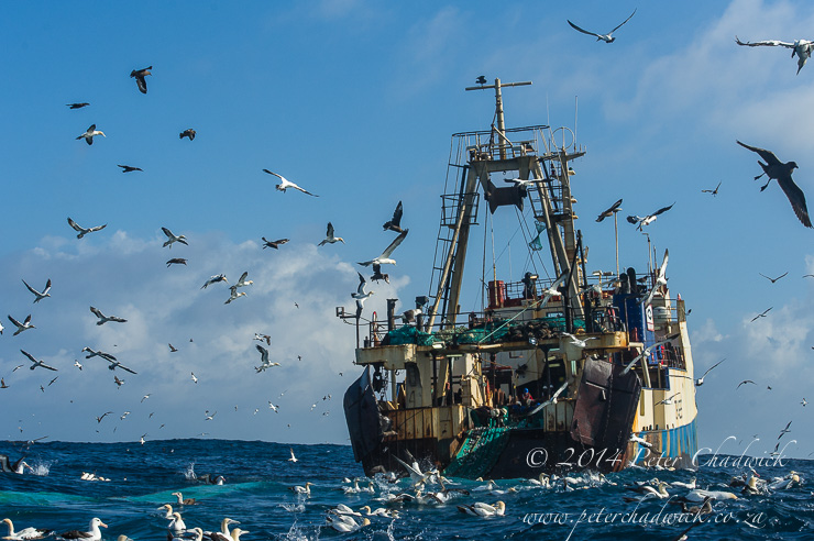 Purse-sein trawler hauling nets by wildlife and conservation photographer Peter Chadwick