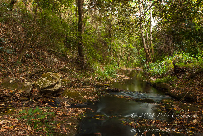 Malelane forest stream by wildlife and conservation photographer Peter Chadwick
