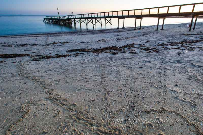 african Penguin tracks of Dassen island beach by wildlife and conservation photographer Peter Chadwick