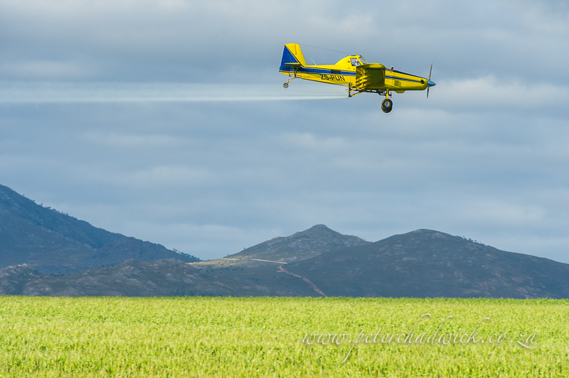 aerial crop spraying of canola by wildlife and conservation photographer Peter Chadwick