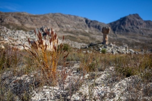 Maltese Cross and Restio | Cederberg Wilderness Area | Landscape Photography | © Arne Purves