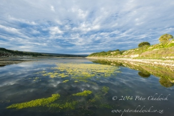 De Hoop vlei by wildlife and conservation photographer Peter Chadwick.jpg